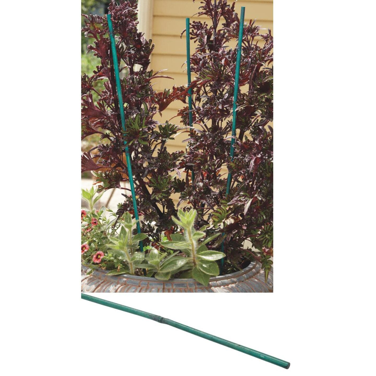 Bond 5 Ft. Green Bamboo Plant Stakes (6-Pack) Image 1